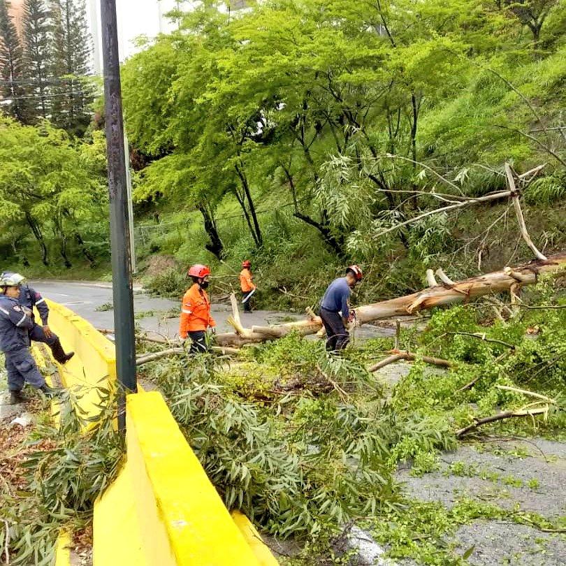 Nuestro equipo de @PC_ElHatillo junto a los Bomberos de #ElHatillo se encuentran atendiendo el árbol caído en la Av. Ppal de #LosNaranjos. #SeguimosTrabajando https://t.co/sN3wwfgzXN