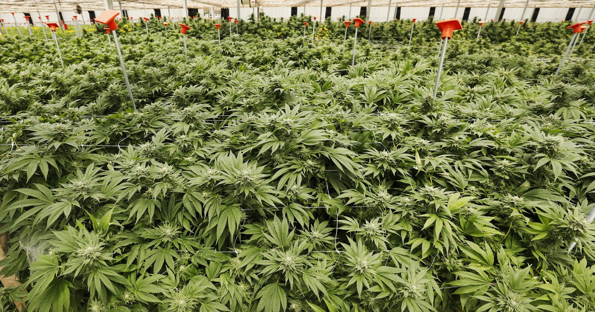 Santa Barbara grand jury blasts county supervisors over marijuana industry http://gaberi.al/RZtg0Tpic.twitter.com/JaHom4SZ1d