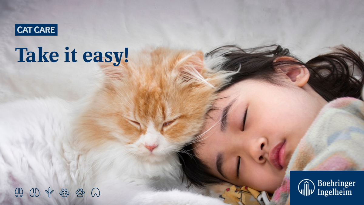 You probably guessed it right! You should always keep calm and be gentle with your #cat to prevent anxiety. Find out more here: ➡ https://t.co/4wprE8ZD3U #CatCare #CatsOfTwitter #meow https://t.co/rusrJDdRa8