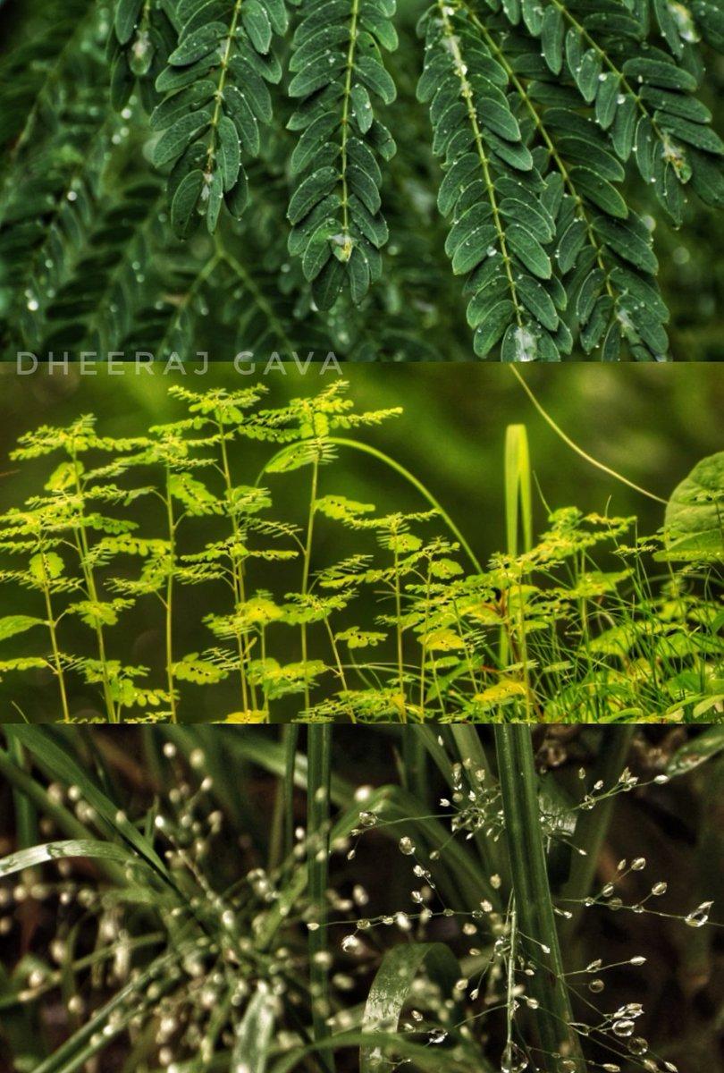 Earth take different shades of Green when it rains. #AhmedabadRain #nikonphotography #FridayFeelingpic.twitter.com/0DWdhQUjgm