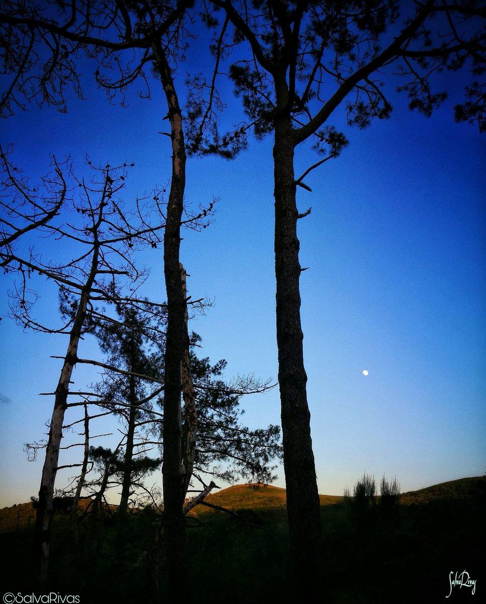 Entre lusco e fusco, Galicia interior... #photooftheday #photography #landscapephotography #landscape #nature #natureza #NaturePhotography #naturaleza #rurallife #galicia #galiza #summer #summertime #rural #dreams #bluehour #blue #aestradapic.twitter.com/R7P111hVj4