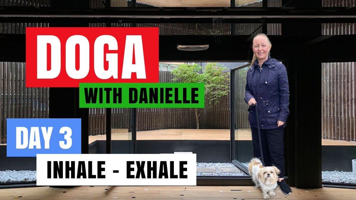 Day 3 • Inhale - Exhale •#DogaWithDanielle   #ChildOfGod #ChildOfGodTeam #ChildOfGodMovement #Doga #Yoga #Movement #Mountain #Pose #MountainPose #Health #Fitness #Malshi #Shitsu #Maltese #Dog #Dogs #DogLover #LucyTheMaltese #MentalHealth  https://t.co/NJAzb6Qxo4 https://t.co/inrF6tAwAS