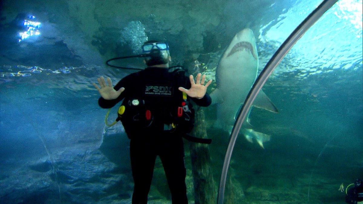 Visitar um vilarejo tomado por crocodilos. Nadar em um tanque cheio de tubarões. Ser envolvido por cobras gigantes. Os repórteres do #CâmeraRecord domingo (5), às 23h15, viajam à Austrália e às Filipinas para encontrar alguns dos maiores e mais perigosos animais do planeta. https://t.co/85DaApSe8w
