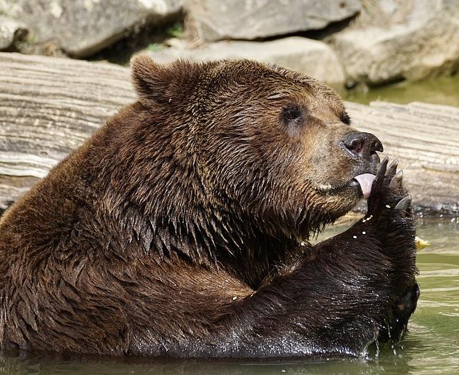"""Sergio Costa on Twitter: """"È stata identificata l'#orsa in Trentino ..."""