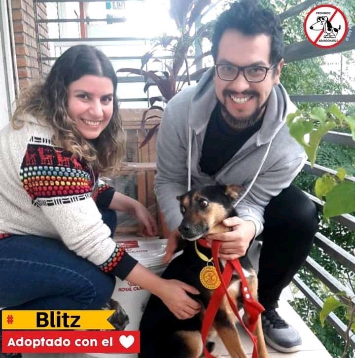 BLITZ ADOPTADO CON EL💜 Laura se comunico con el equipo de adopciones, ella pregunto por Blitz y por otro perrito pero sin dudas el le robo el corazón. Después de estar 4 años en el Refu, hoy Blitz (ahora Dante) tiene una familia que lo llena de mimos. Que sean muy felices 💜 https://t.co/KKYUpSsiXF