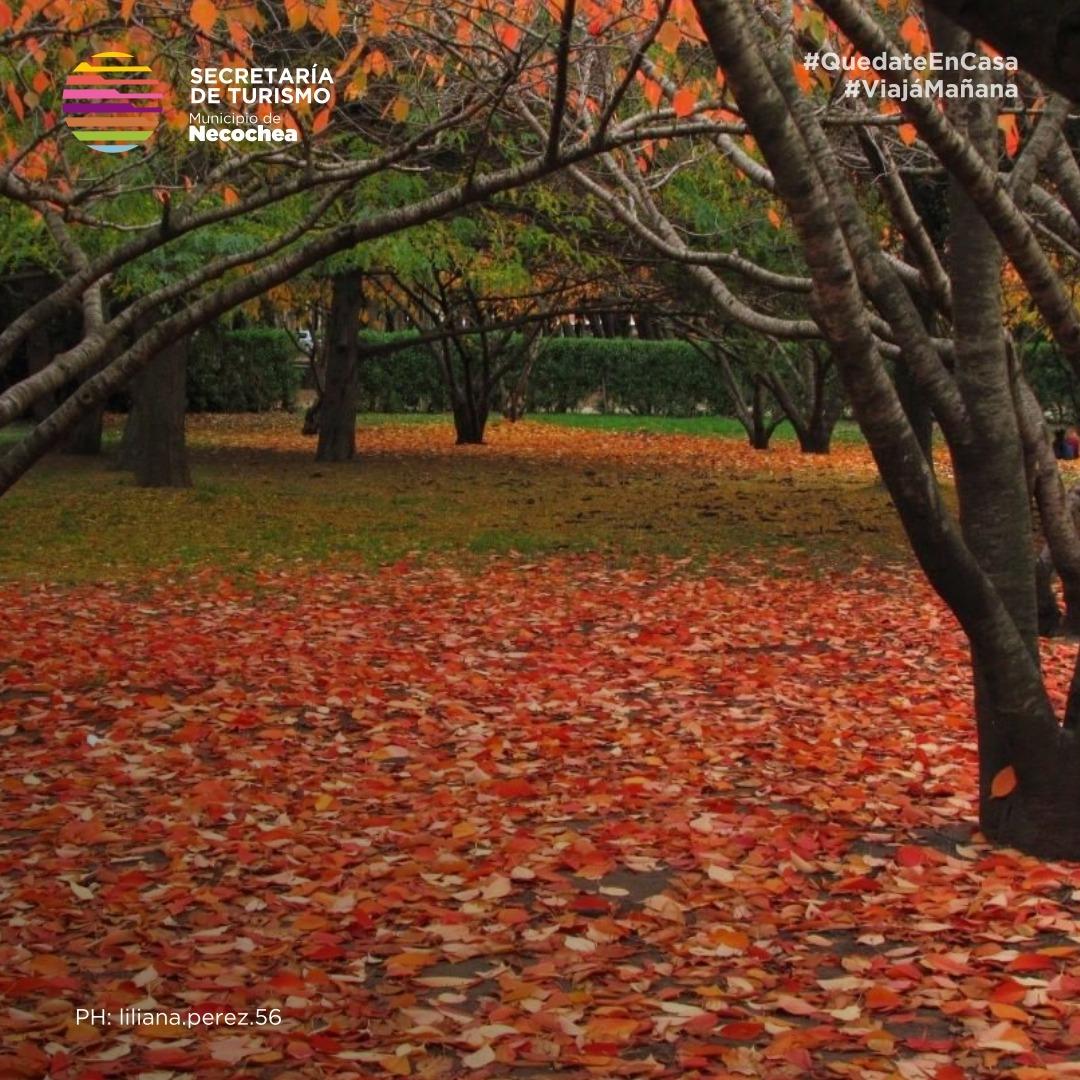 Los mágicos colores del invierno en el Parque Miguel Lillo 🌄  #NecocheaTeEspera #Necochea #ParqueMiguelLillo 🌲#PaisajesQueEnamoran #PaisajesHermosos 🏞️ #VolverAViajar #ViajaMañana https://t.co/a7iNoBaEMY