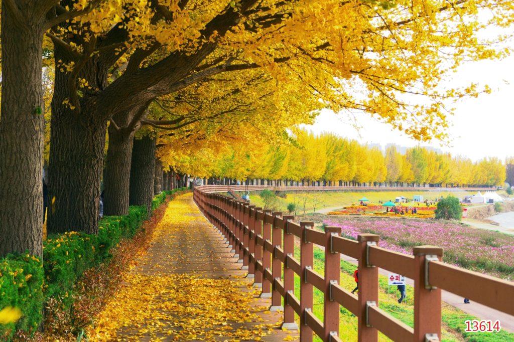 Autumn Leaves In Korea and Seoul   #Travel #Explore #Nature #Autumn #southKorea #Natureloverspic.twitter.com/JbIpQbG7fo