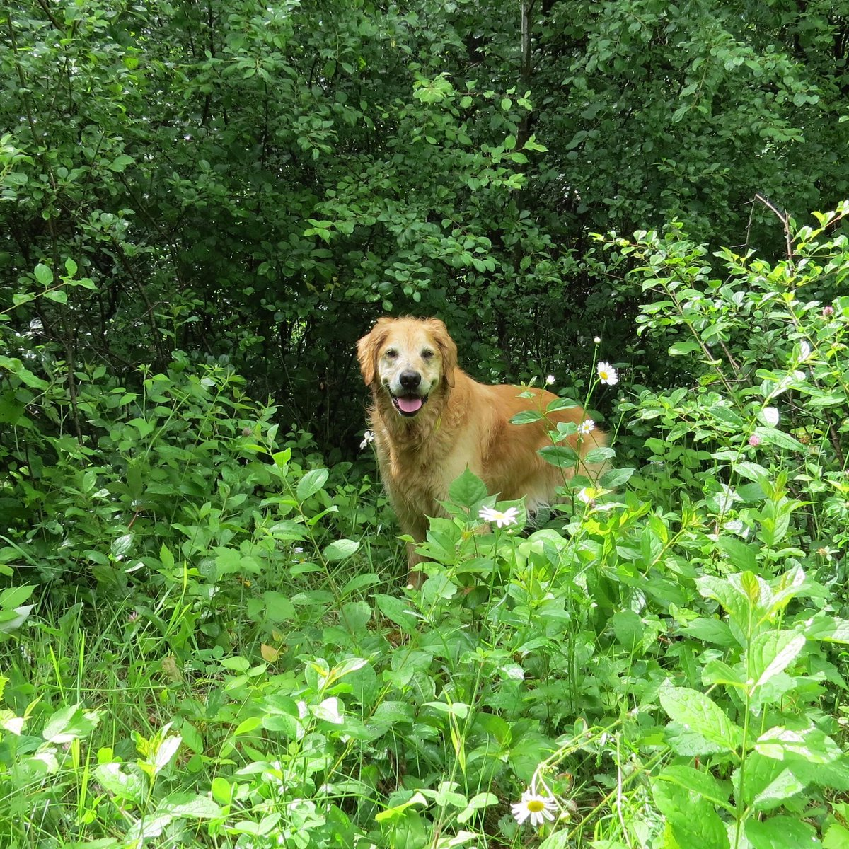 #weekendsmiles is OPEN for photo entry #GRC Darbi Jo demos @darbijothegoldn  What? Contest for smiles Who? All dogs may enter How-to? Post pix below/in tweet + # Add dog's name  Enter early  #dogcelebration #dogsoftwitter https://t.co/ECMt9GHdwF