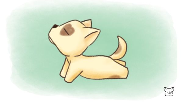 """Yoga-Wan and the Cobra Pose・ヨガわんとコブラのポーズ """"Don't overdo it!"""" 「無理しちゃダメ!」  -  #yoga #dogs #Yogawan #ヨガ #ヨガわん #fitness #Exercise #イラスト #yogi #yogalife #イラスト好きと繋がりたい #yogalove #ヨガ部 #オリキャラ #ヨガ好きな人と繋がりたいpic.twitter.com/FGi26N6cPs"""