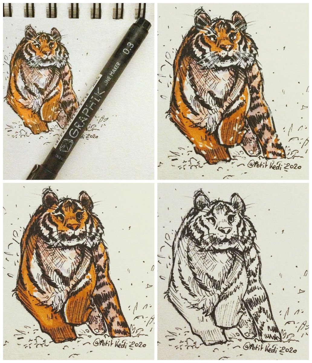 Quick Markers study of a tiger running snow  Check my project's artpage @TeamKokedi #art #study #tiger #markers #promarkers #snow #traditionalart #traditionaldrawing #animalstudy #feline #felinestudy #wildlife #studying #anatomy #animalanatomy #practice #doodle #sketch #drawingpic.twitter.com/EUL85uXXIZ