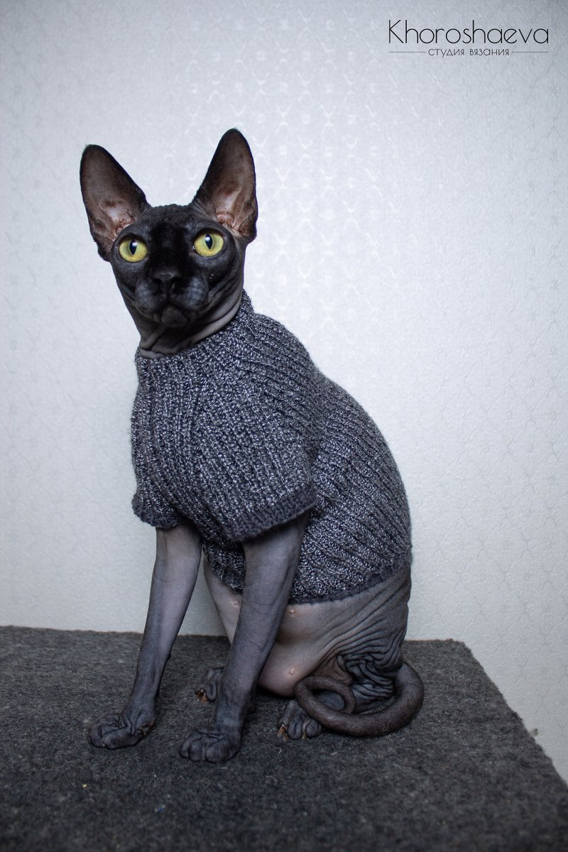 Excited to share the latest addition to my #etsy shop: Cat blackwhite sweater size M knitting pattern PDF + The pattern supplement, Sphynx turtleneck knitting pattern PDF https://t.co/fjqlTUZFEy #knitting #birthday #thanksgiving #catcostume #catsize #warmsweater #handm https://t.co/KGoVWXvLTk