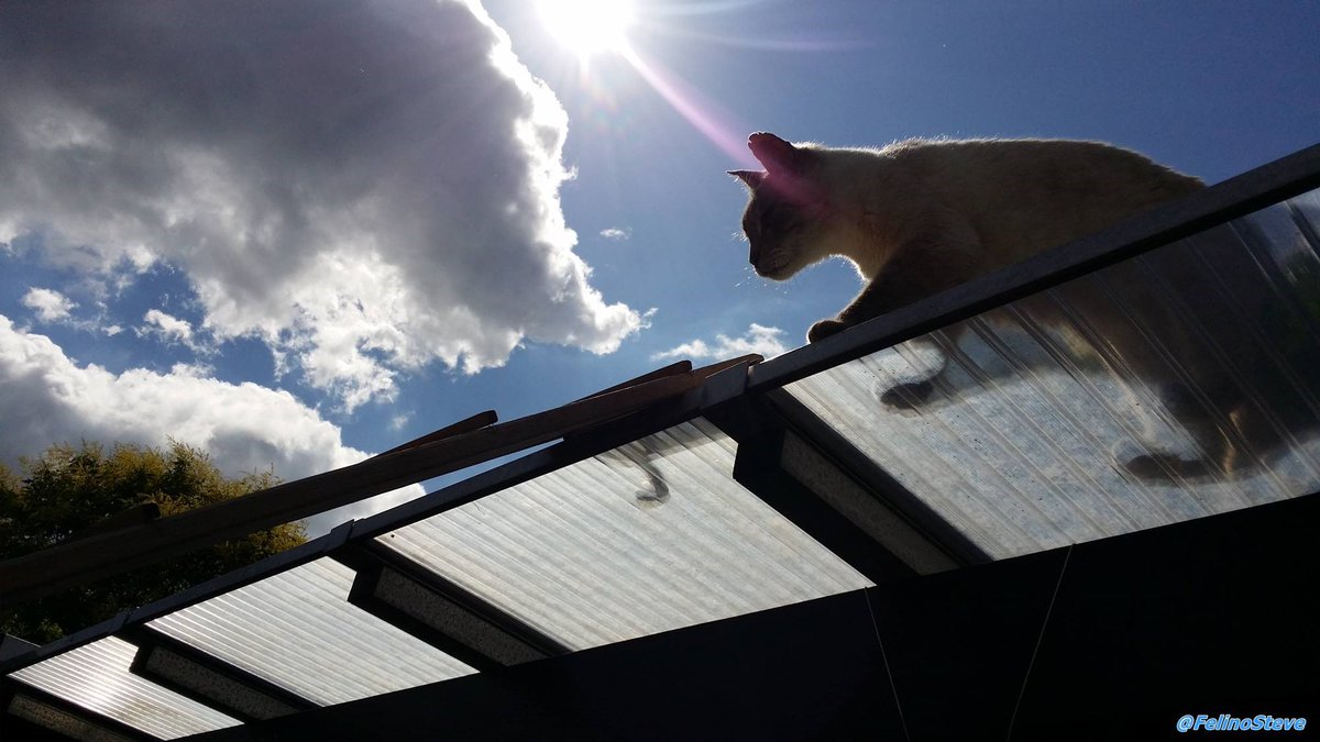 Steve ist auf dem Dach und checkt die Lage . Steve is on the roof and checks the situation. #SuperSeniorCatsClub #SuperSenior #cats pic.twitter.com/UbJo54y0Ck  by Felino Steve