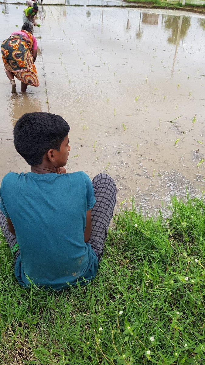 "Cultivating native paddy through ""natural farming"" PadmaSri @subhash_palekar method for this Kharif season.  Zero pesticides and zero fertilizers.   #agriculture #farmlife @kattashekar @SingireddyTRSpic.twitter.com/WJHF0KEFPC"