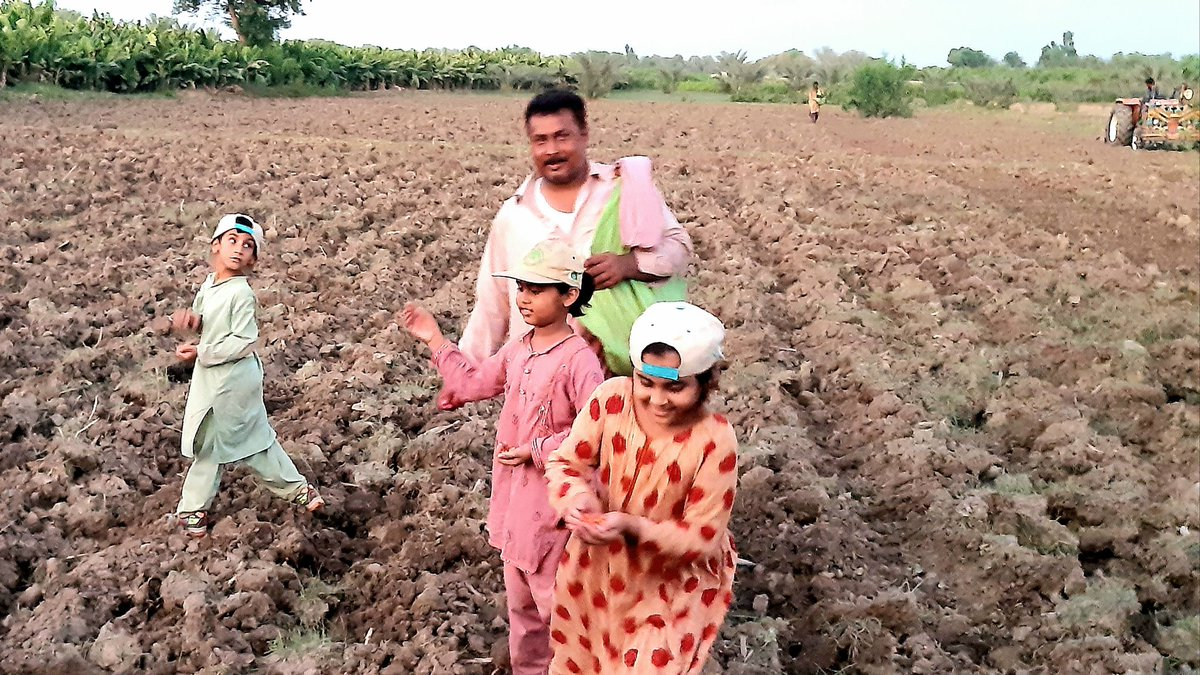 Broadcasted corn #seeds Used #rotavator to turn soil, cover seeds, to retain #moisture & for #protection and to save both time & money Enjoyed seed broadcasting in #moonlight #Agriculture nt only sustain #supplychain bt also provides #cash & #livelihoods too #Maize #Sindh pic.twitter.com/jZGUdOpDCt