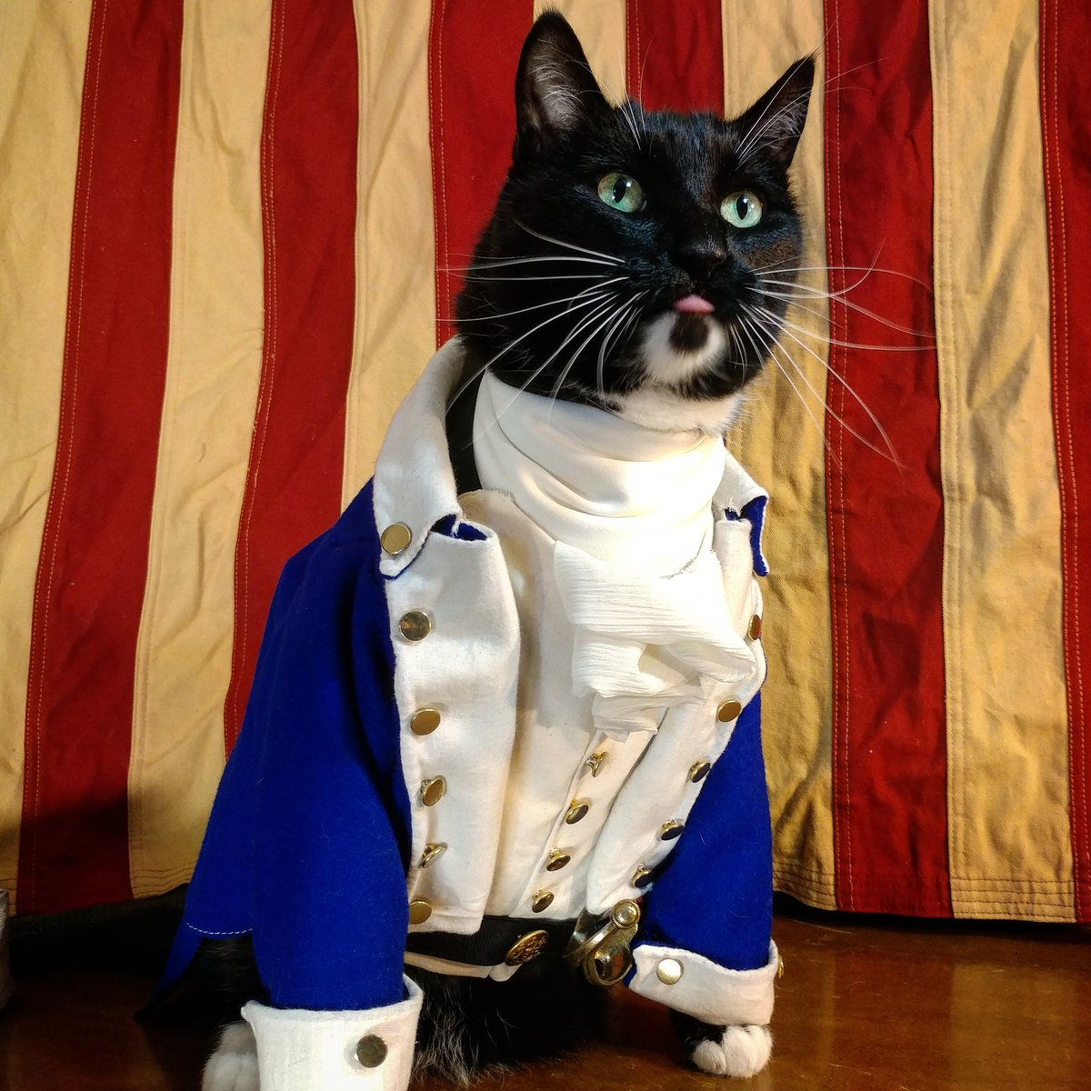 """""""Pardon me, are you Aaron Purr, sir?""""   #Hamilton #Caturday pic.twitter.com/xDiMBUaxcm  by Cat Cosplay"""