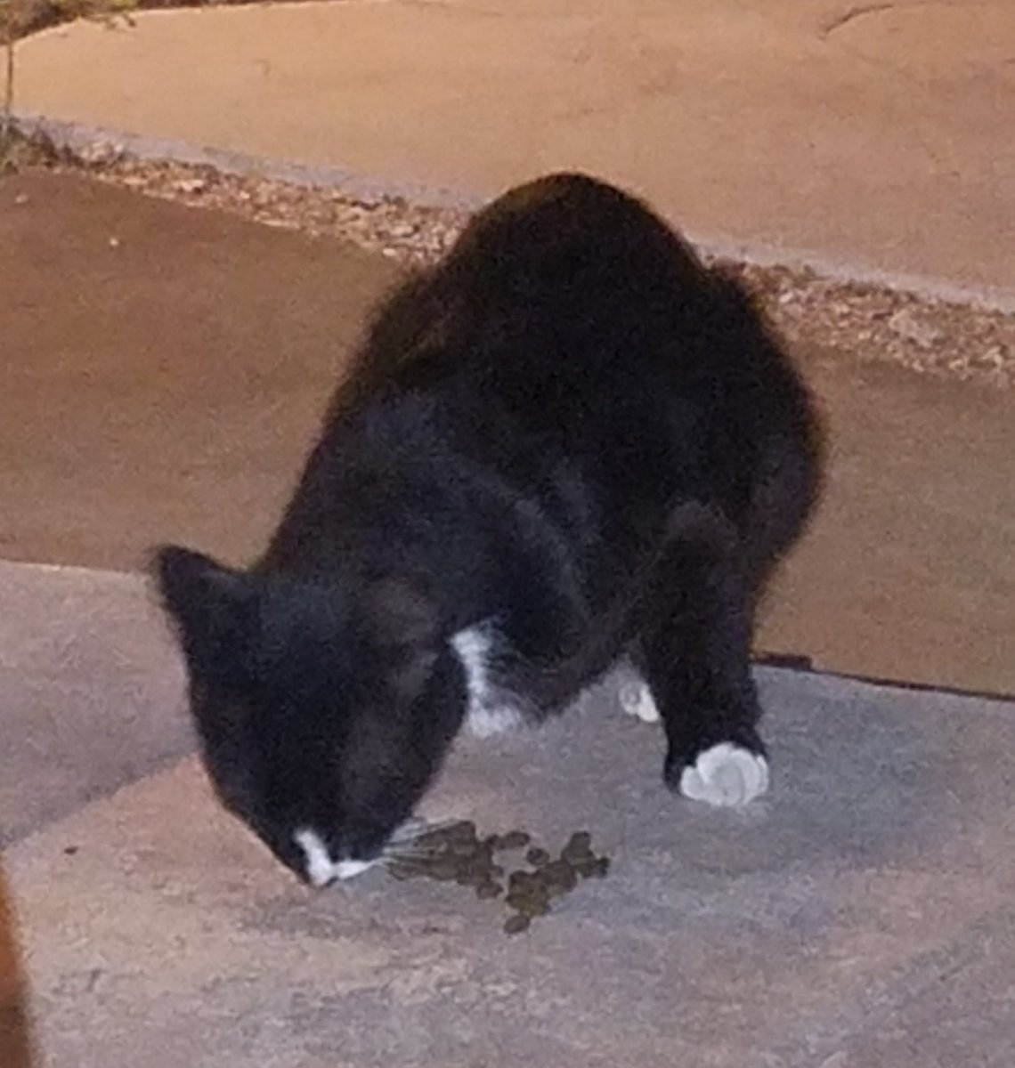 This is like the 4th time Slinky has shown up to eat today. Mom doesn't even feed me that much. She says I should be happy with my full bowl. Whatevs, Mom. #TalkToThePaw  #CatsofTwitter #Cats #CatLife #CatChronicles pic.twitter.com/GADQVeHc5m  by The Naughty Pussycat