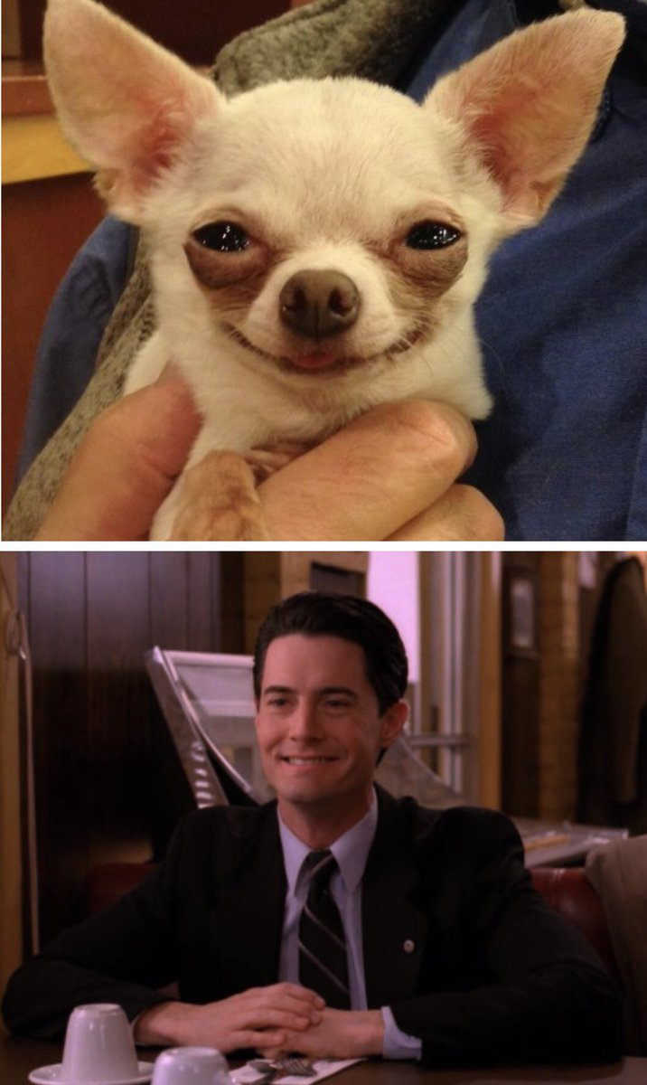 """Gordon Cole: """"Cooper you remind me today of a small Mexican chihuahua.""""  #twinPeaks #GordonCole #DaleCooper #KyleMacLachlan #DavidLynch"""