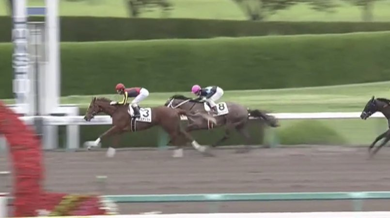 阪神6R 2歳新馬戦を優勝したのは、#デュアリスト!  新種牡馬 #ミッキーアイル 産駒のJRA初勝利だよ!おめでとう!  #うまび https://t.co/0ZkPGqhZsD