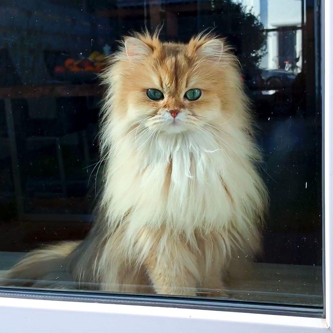 .@Calgun Guten Morgen liebe Calgun und wünsche dir einen wunderschönen Samstag  #cats #catsoftwitterpic.twitter.com/sBkOYKS4xC  by 𝙈𝙖𝙧𝙩𝙞𝙣𝙖 𝙍𝙤𝙨𝙚𝙢𝙖𝙣𝙣 🌹😎🇩🇪
