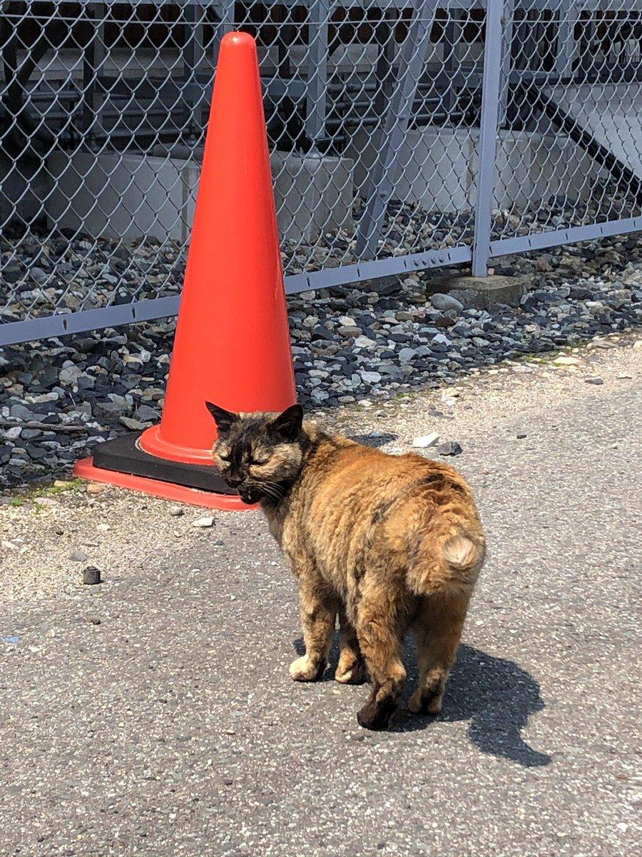 訃報 実習棟に住んでいた猫のジャンゴが、昨日7月3日に亡くなりました。学生が倒れているところを発見し、その後若月先生がジャンゴの体を丁寧に拭くなど最期を綺麗にしてくださいました。現在は実習棟1階の版画コースアトリエにて安置されています。(続く)