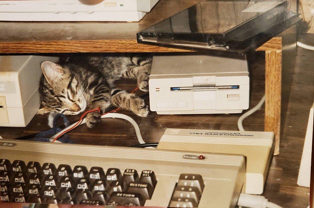 Wir wünschen einen tollen #Caturday! pic.twitter.com/Q9nJg3niOO  by getDigital Team