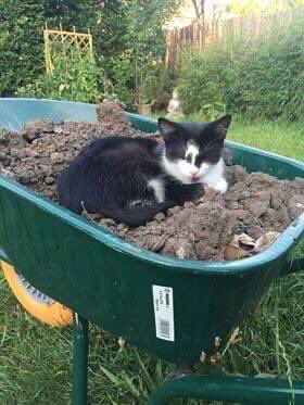 I'll be gardening on #caturday , what about you? Have a nice day!  - signed Kenza pic.twitter.com/QQ2mzN1psQ  by Pi