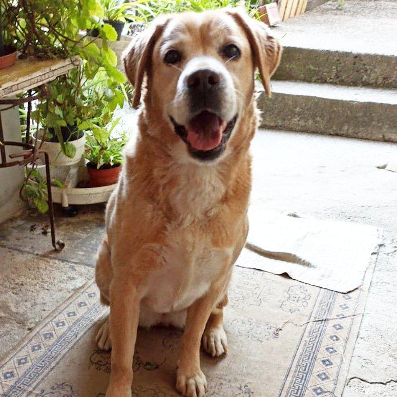 #dog #doglover #doglife #dogoftheday #dogs #doglovers #dogphotography #dogslife #instadog #ilovemydog #mydog #dogsmile #dogphoto #dogfashion #labrador #labradorretriever #labradoroftheday #labradorlove #labradorlife #labradorlover #mylabrador #lovepic.twitter.com/3jZoezIAeR
