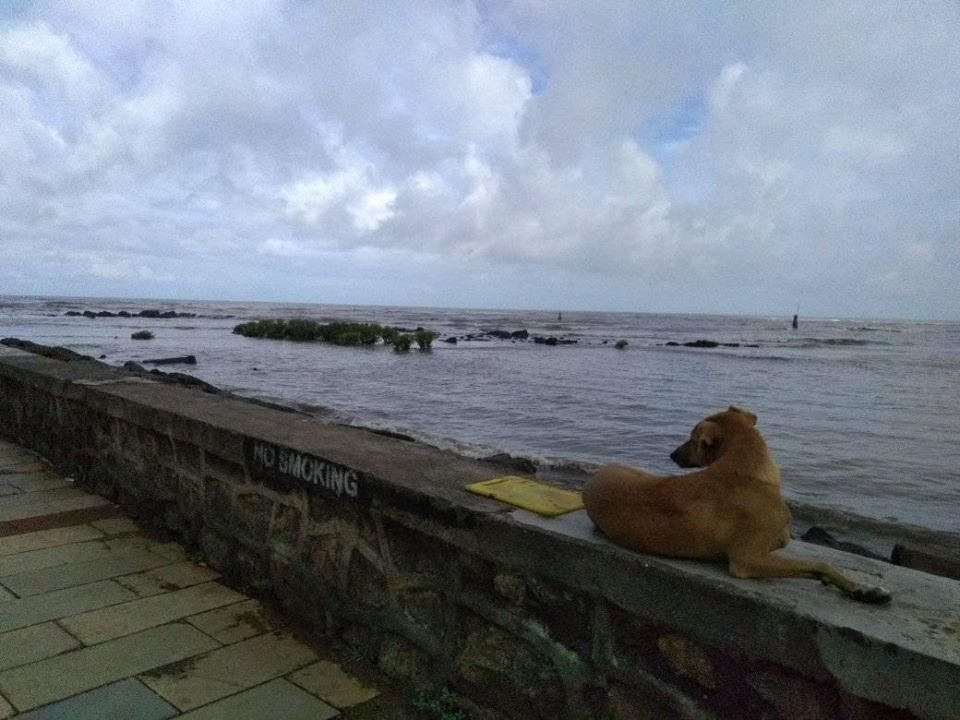 Oye #Mumbai sab theek hai   #MumbaiRains   Tommy is keeping a watch https://t.co/QGsNBueR6P