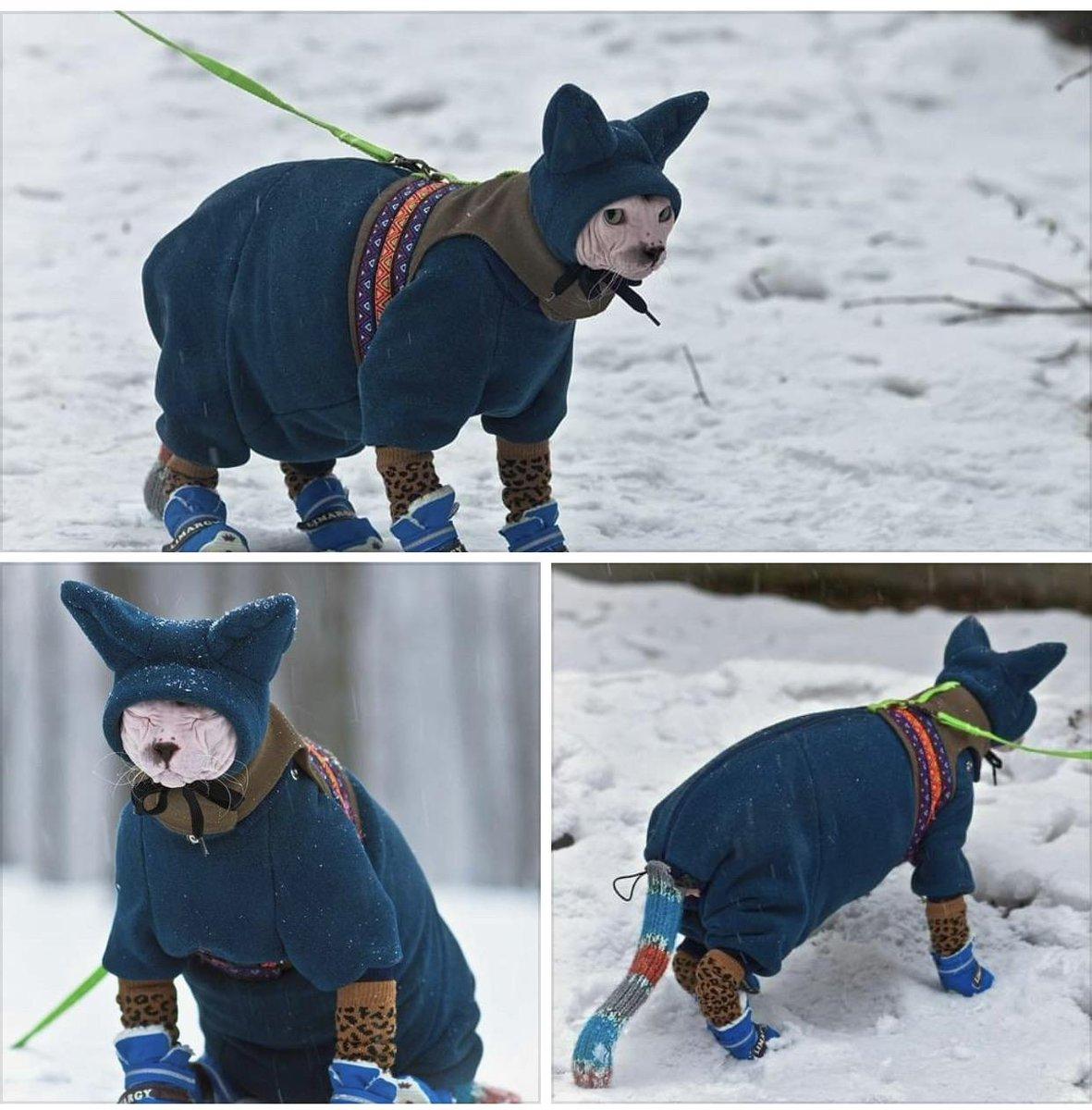 nekkid cat has to bundle up for cold weather #bundles #ilovecats pic.twitter.com/qZJO8wEVPj