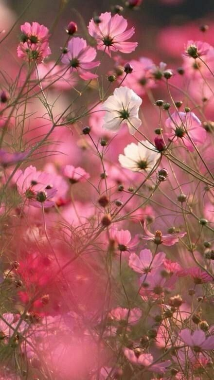 """""""Joy frees the mind and fills it with Tranquillity.""""     ~Anon           #SaturdayMood  <br>http://pic.twitter.com/h958mwfPtj"""