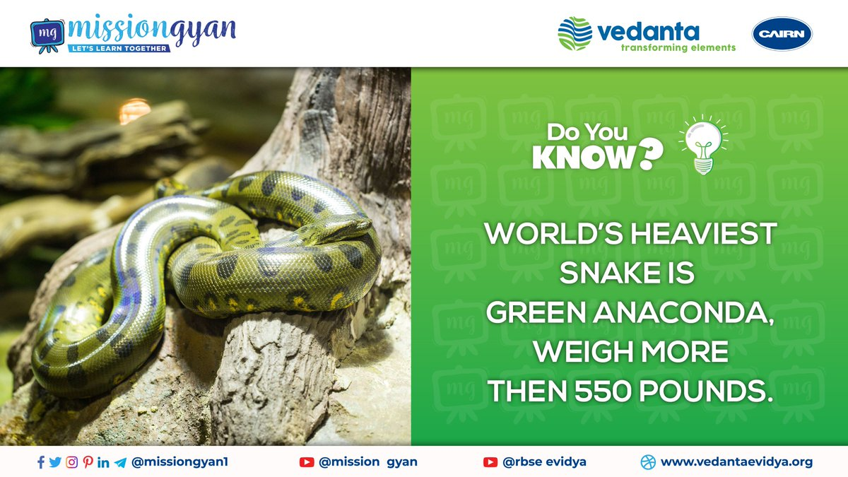 #DoYouKnow WORLD'S HEAVIEST SNAKE IS GREEN ANACONDA, WEIGH MORE THAN 550 POUNDS. . . #missiongyan #freeeducationforall #freeeducation #education #freedomtostudy #dailyfacts #snake #anaconda #anacondasnake #heaviestsnake #anacond #anacondafact #staytuned #appcomingsoon #mobileapp pic.twitter.com/TxlHhe95UK