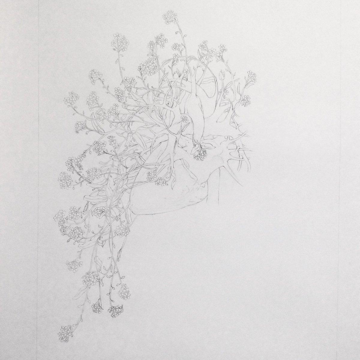 Progress of #pencil #drawing #ArcticHeart no. 12 with #forgetmenots  #art #artlife #amdrawing #illo #illustration #illustrationart #fineart #finearts #artoftheday #workinprogress #humanheart #wippic.twitter.com/GNQ6bvfxb5