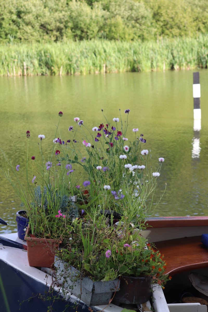 Flowers.  Your #garden does not have to big. Some wonderful plants on barges. Happy #SaturdayMorning <br>http://pic.twitter.com/jYZCaigDlf