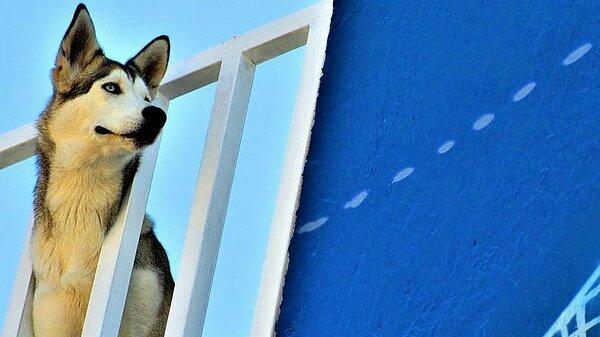 Dog on a roof terrace in #Tonala #Guadalajara #Mexicopic.twitter.com/KZYOmhWUP1