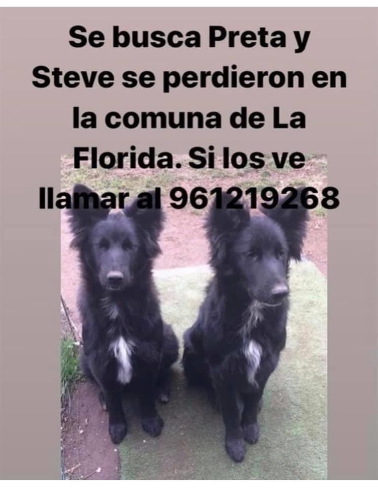 Difundo: se buscan estos dos perritos perdidos en #laflorida su familia los busca, si los ve retener y llamar al número de contacto @KathySalosny @KathySalosny @TonkaTP @carolinapinoc rt https://t.co/sqKbyVeuZj
