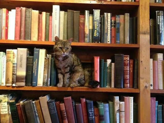 Agatha, the bookstore #cat at Shakespeare and Co. in #Paris   #Caturdaypic.twitter.com/NDrVpMRZCy