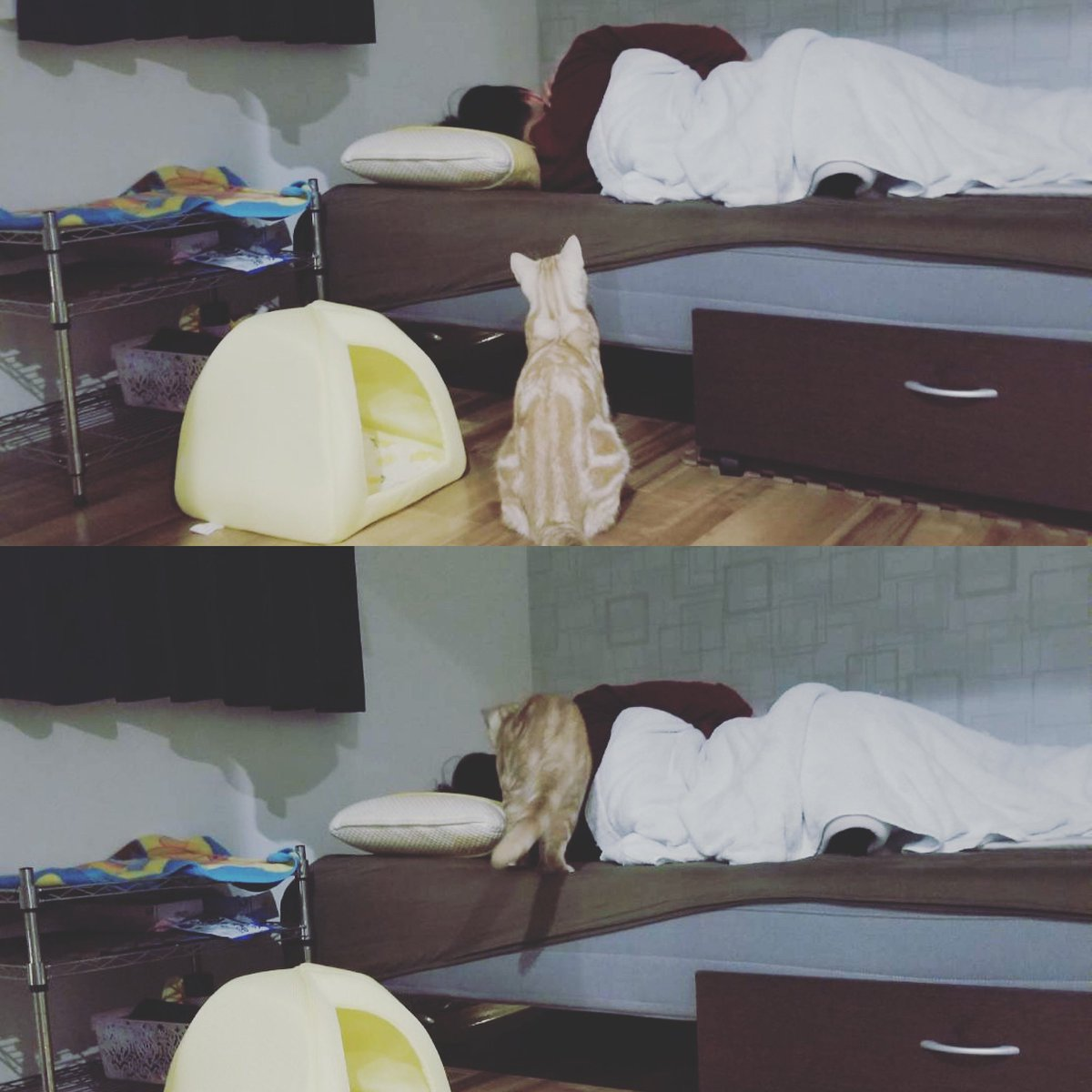 飼い主の体調がすこぶる悪かったこの日。普段絶対にベッドに乗らないオハナが心配してくれました。  #オハナ #オハナチャンネル #猫 #猫好きさんと繋がりたい #猫好き #ねこのきもち #ねこ部 #peppyフォト部 #cat #catsofinstagram #catloversworld  #instacat_meows #happycatclubpic.twitter.com/doiSO70WvQ