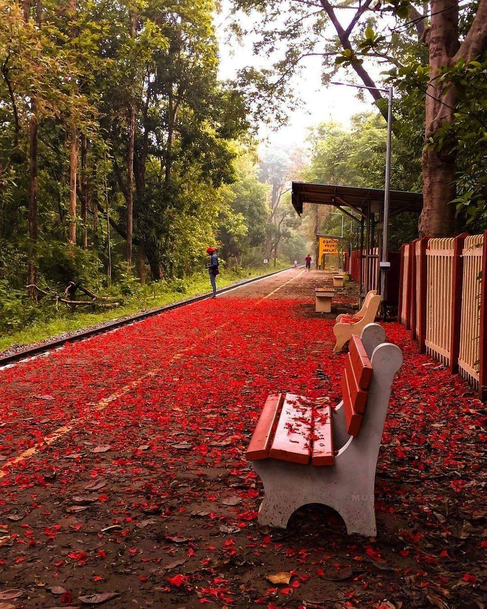 Melattur railway station, Malappuram, Kerala, during the lockdown.||@Vibhanw18pic.twitter.com/HqIUp6swiI