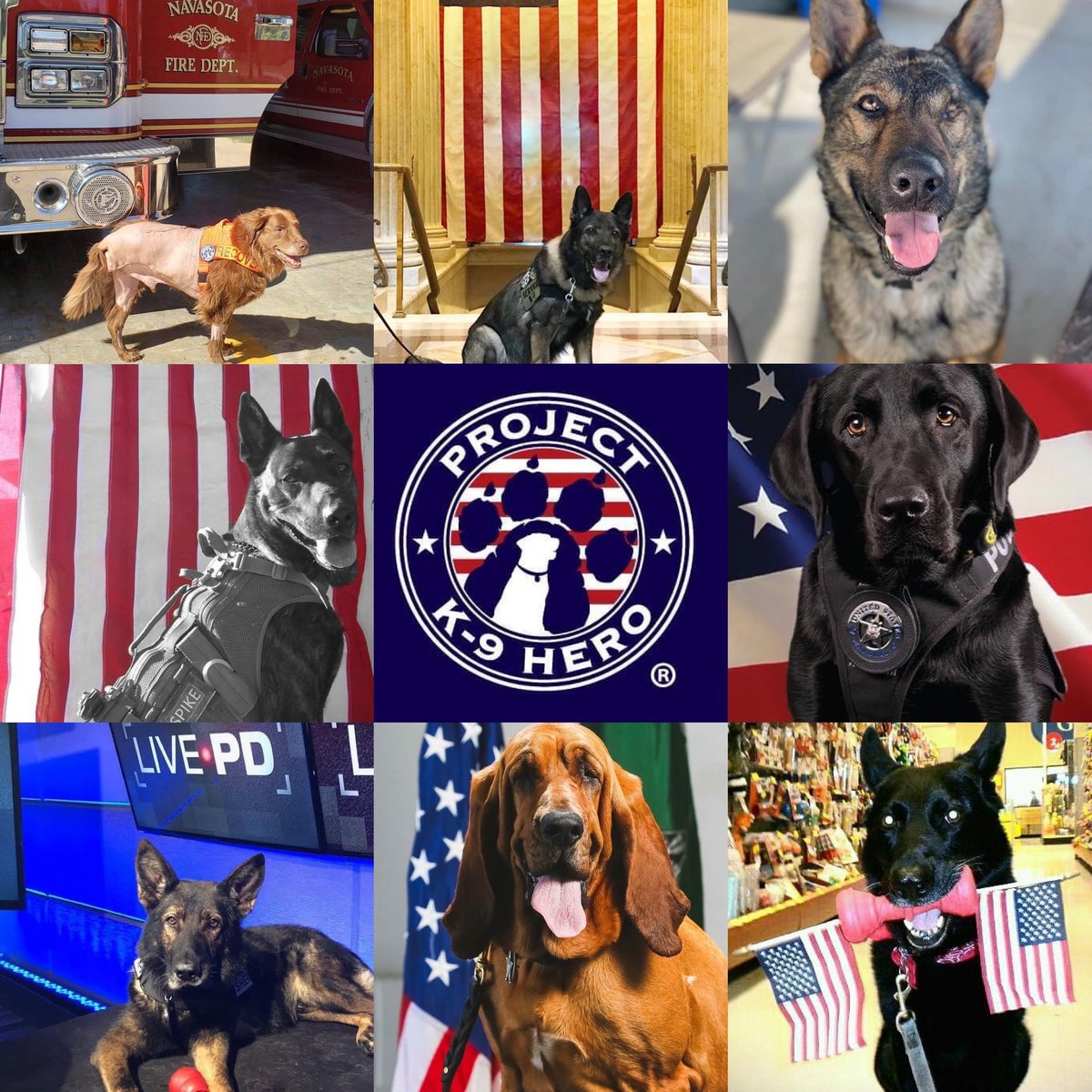 On behalf of the entire pack at Project K-9 Hero, Happy Independence Day America 🇺🇸! PROJECTK9HERO.ORG #4thofJuly #4thofJuly2020 #independenceday #freedom #america #usa #JJK9