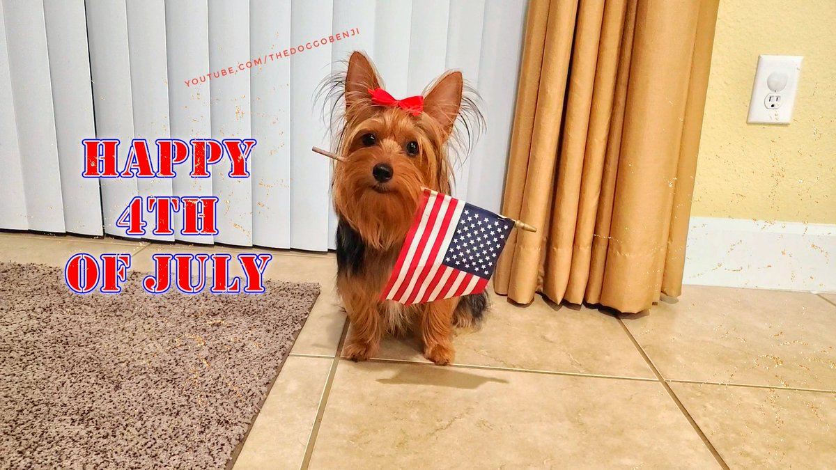 Happy 4th of July #4thofJuly2020 #4thJuly #4thofJuly #dogsoftwitter #USA https://t.co/oOvKyTE3dw https://t.co/qwEabwkRns