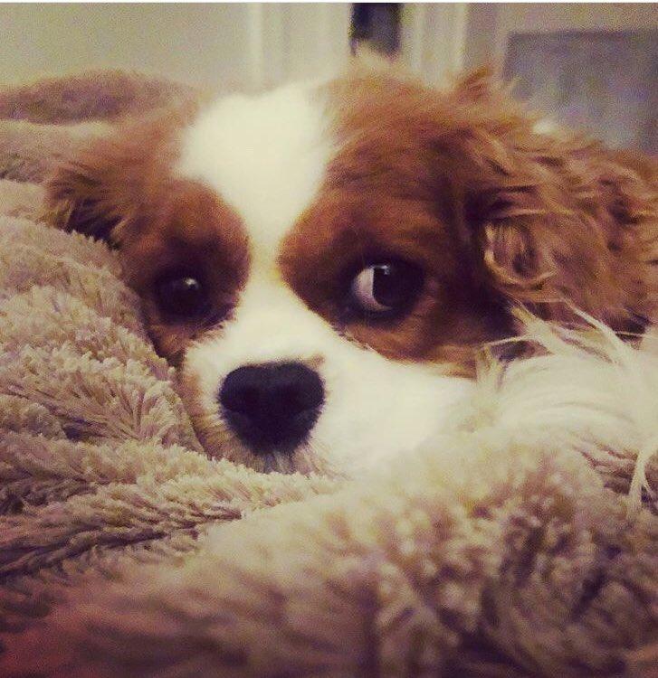 Wie ktoś jaka to rasa psa? 🥺