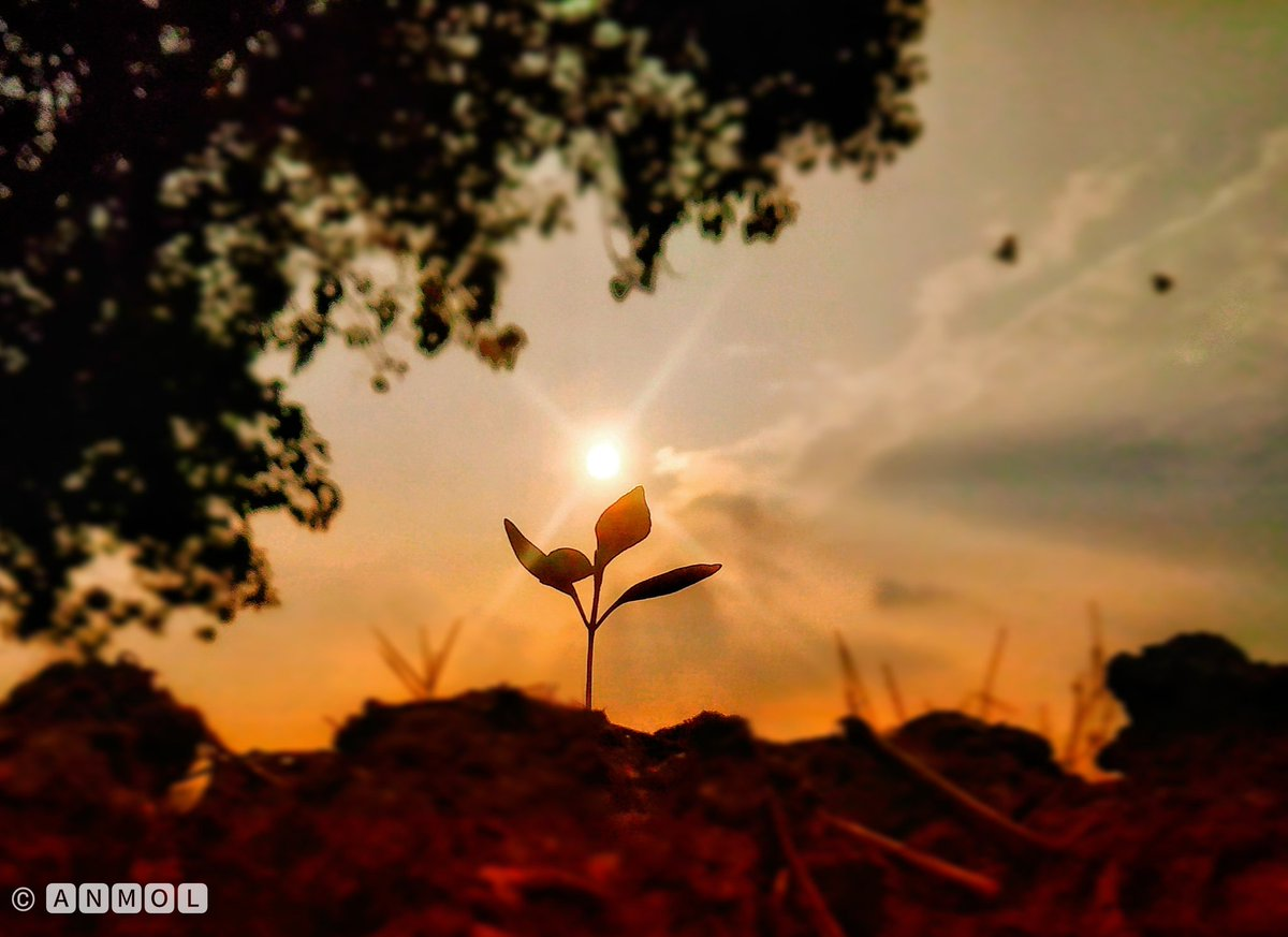 How lovely the silence of growing things. #mobilephotography #plants #sunset  Follow me for more..! Instagram - clickonic pic.twitter.com/hWexL5AKJk