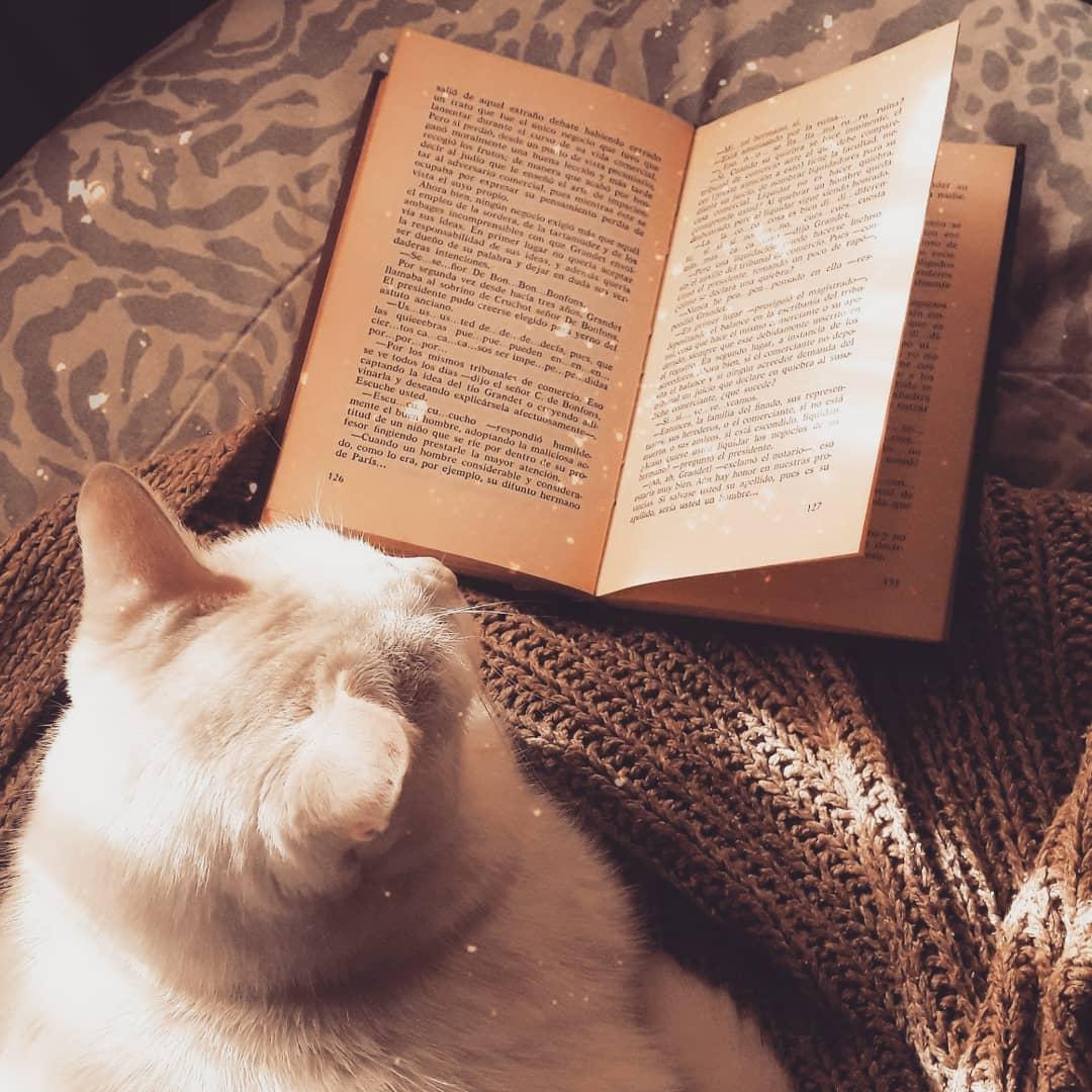 """""""El amor de las personas por los libros se mide por lo que hacen cuando se quedan a solas con ellos""""/// . . . #home #frases #style #homesweethome #catslovers #styleoftheday #stayhome #cats #love #happinesspic.twitter.com/gdwYNHWqvO"""