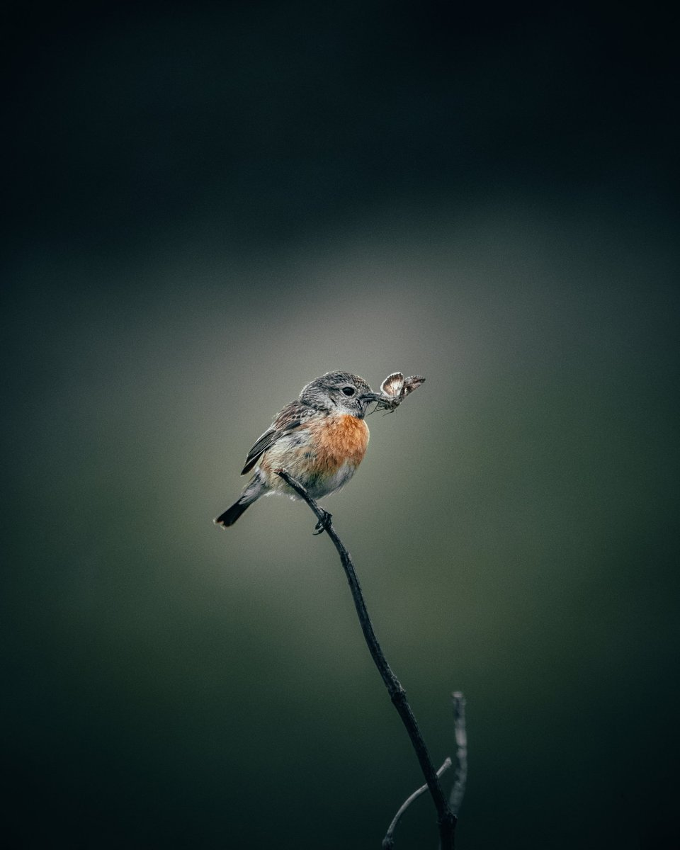 Eastbourne, England🌿  #wildlife #bird #birds #outdoors #uk #nature #photography #travel #fujifilm #england #wildlifephotography https://t.co/uxDpe9b5kP
