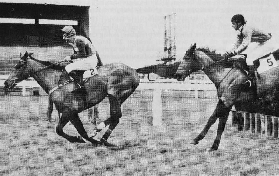 Tommy Whittle Chase @haydockraces First run in 1982 It was won by the 1981 Cheltenham Gold Cup winner Little Owl & A.J.Wilson(In front at the last) they beat 1983 Gold Cup winner Bregawn by 10 lengths!