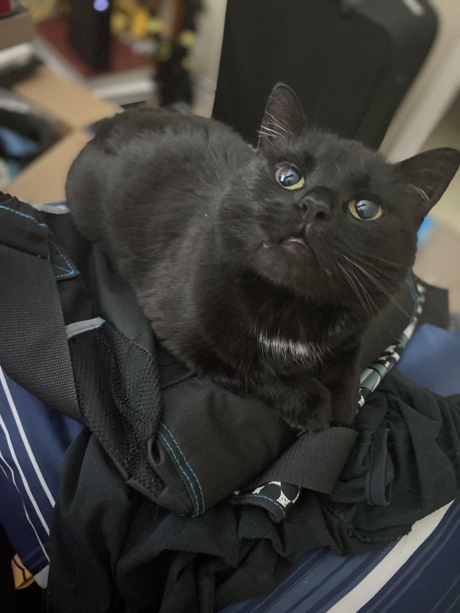 My cat is beautiful. #blackcat #cat #cute #cutecat