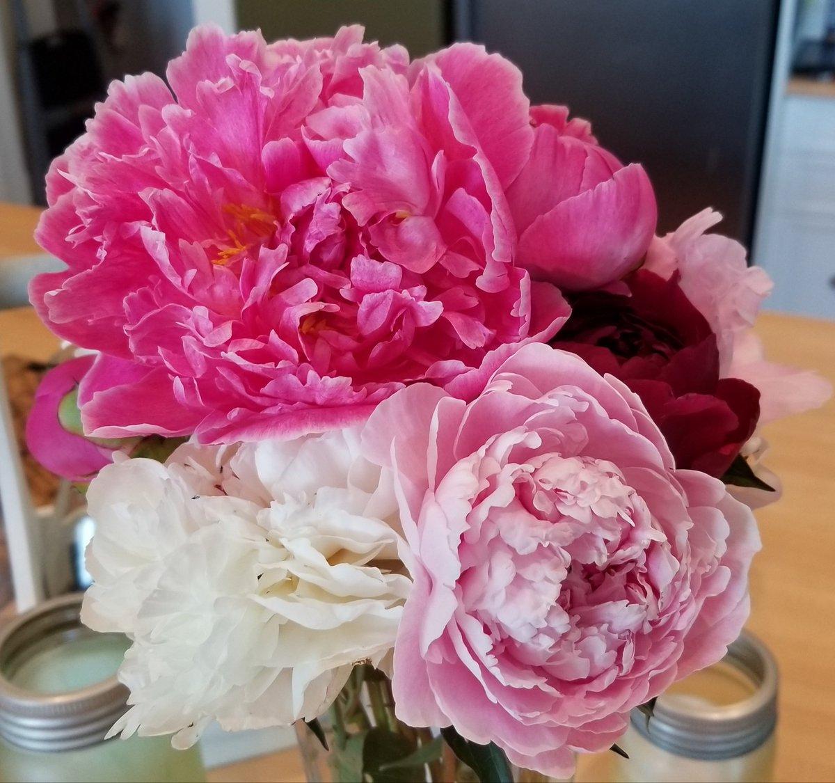 LOVE peony season!!! #gardening https://t.co/hfGCHSdmMu