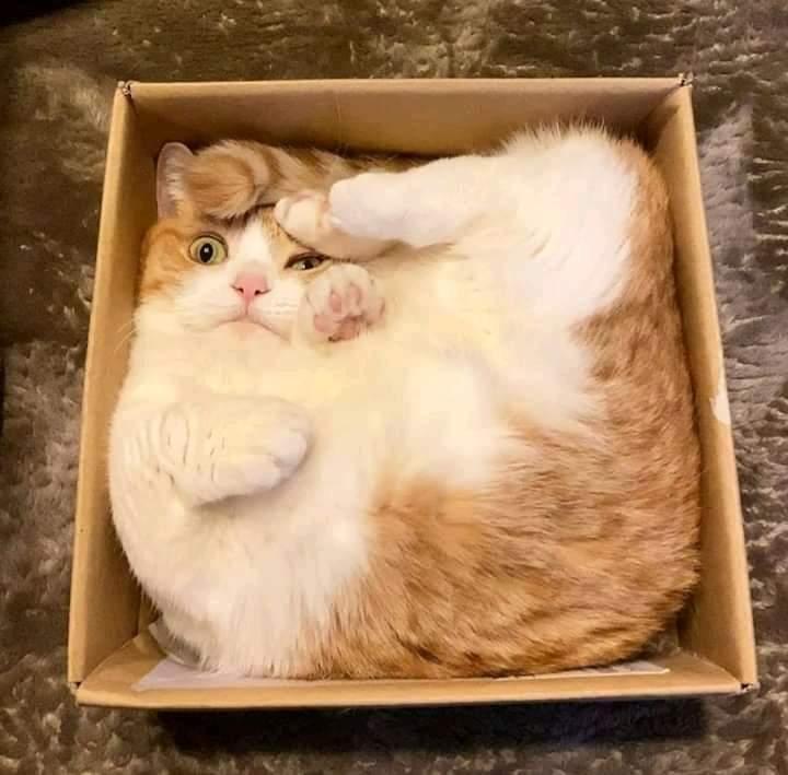 Vendo gato casi nuevo en su empaque original. Solo se sacó una vez para acariciarlo. 😅 https://t.co/B9xKyLQE4b