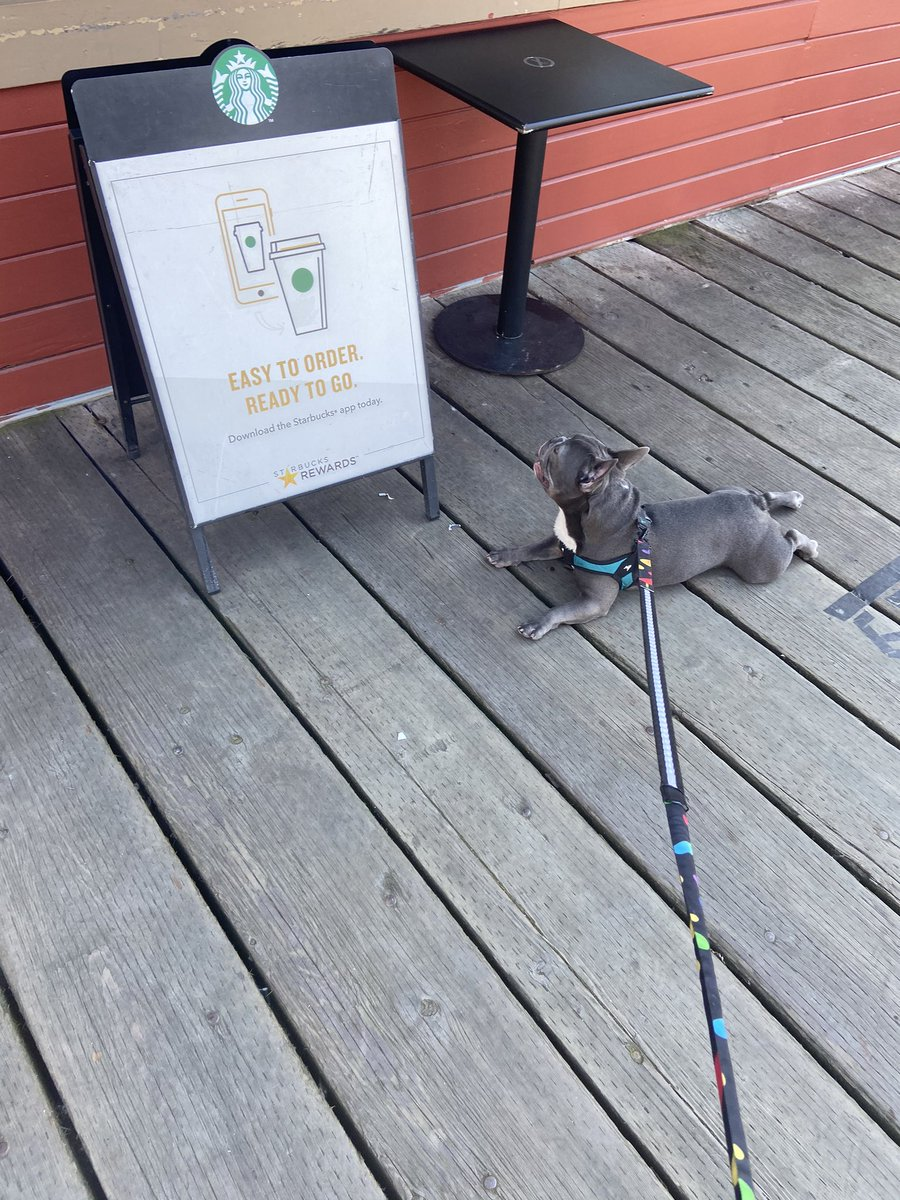 He wants another puppuccino an refuses to walk https://t.co/IRn99JBhk7