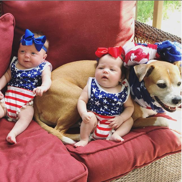 Lots of treats were had after this pic! Happy Independence Day from my pack to yours! #pitbull #Pitbulls #pitbulllovers #pitbullmoms #americanbully #pitbullterrier #gifts #gift #Dog #dogs #COVID19  #USA #4thofJuly #4thofJuly2020 #FourthofJuly2020pic.twitter.com/gorORuuxOW